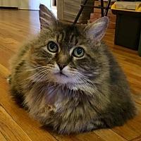 Adopt A Pet :: Adele - Budd Lake, NJ