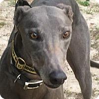 Adopt A Pet :: Big Blue - West Palm Beach, FL