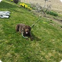 Adopt A Pet :: Bertha - Meridian, ID