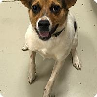 Adopt A Pet :: Cup Cake - Decatur, AL