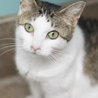 Adopt A Pet :: Temperance - West Des Moines, IA