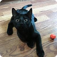 Adopt A Pet :: Spangle - Capshaw, AL