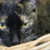 Adopt A Pet :: Heart - Richmond, VA