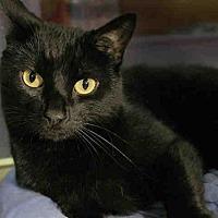 Adopt A Pet :: SARASOTA - Pittsburgh, PA