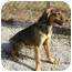 Photo 2 - Whippet Mix Puppy for adoption in Kokomo, Indiana - Tosha