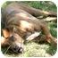 Photo 1 - Boxer Mix Dog for adoption in Cincinnati, Ohio - Hope