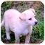Photo 3 - Terrier (Unknown Type, Medium) Mix Puppy for adoption in Fredericksburg, Virginia - Nitro