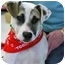 Photo 3 - Terrier (Unknown Type, Small) Mix Puppy for adoption in Northville, Michigan - Star