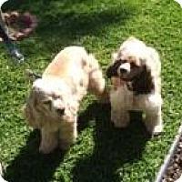 Adopt A Pet :: Cody & Dakota - Toluca Lake, CA