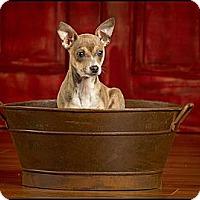 Adopt A Pet :: Minnie - Owensboro, KY