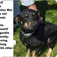 Adopt A Pet :: # 003-10 - ADOPTED! - Zanesville, OH