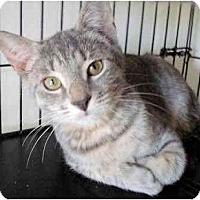 Adopt A Pet :: Hannah - Colmar, PA