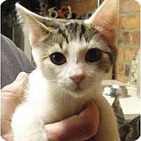Adopt A Pet :: Tipper - Chesapeake, VA