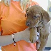 Adopt A Pet :: Genesis - Crawfordville, FL
