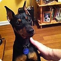 Adopt A Pet :: Buster - Nashville, TN