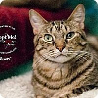 Adopt A Pet :: Romeo (& Juliet Bonded Pair) - Lakewood, CO