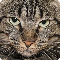 Adopt A Pet :: Layla - Glendale, AZ