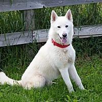 Adopt A Pet :: Dexter - Harvard, IL