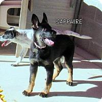 Adopt A Pet :: Sapphire (Puppy) - Lindsay, CA