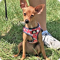 Adopt A Pet :: Bambi - Tavares, FL