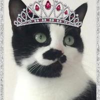 Adopt A Pet :: Chatty - Victoria, TX