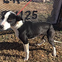 Adopt A Pet :: Petey - Okmulgee, OK