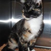 Adopt A Pet :: Lorelei - Waupaca, WI