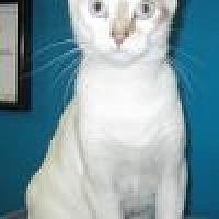 Adopt A Pet :: Mai Tai - Powell, OH