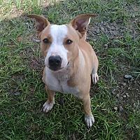 Adopt A Pet :: Jasper-URGENT - CRANSTON, RI