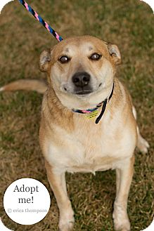 Blue Heeler Mix Dog for adoption in Brookings, South Dakota - Cheyenne