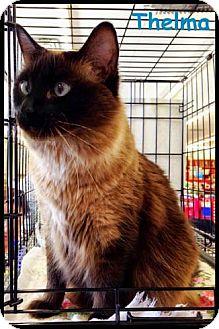 Balinese Cat for adoption in Merrifield, Virginia - Thelma