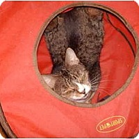 Adopt A Pet :: Tabitha - Hampton, CT