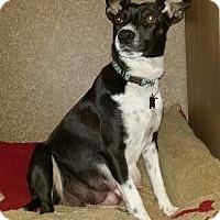Adopt A Pet :: Sophia - Marlton, NJ