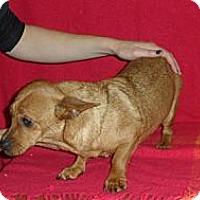 Adopt A Pet :: Fracus - Seattle, WA