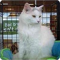 Adopt A Pet :: Tinkerbelle - Easley, SC