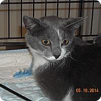 Adopt A Pet :: Sierra - Riverside, RI