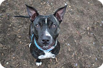 Labrador Retriever Mix Dog for adoption in Brookhaven, New York - Peeps