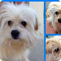 Adopt A Pet :: Kanter - Meridian, ID