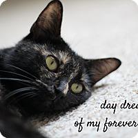 Adopt A Pet :: Maya - Richmond, VA