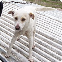 Adopt A Pet :: Sugar - Lafayette, LA