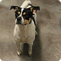 Adopt A Pet :: Piper - Mooresville, IN