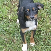 Adopt A Pet :: Stretch - Bonifay, FL