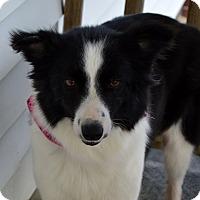 Adopt A Pet :: Lolly - Westport, CT