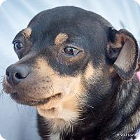 Adopt A Pet :: Rosie - San Marcos, CA