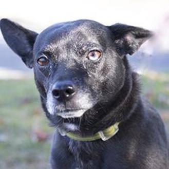 Mixed Breed (Medium) Mix Dog for adoption in Hilliard, Ohio - Missy