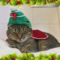 Adopt A Pet :: Tiger Lily - Cumming, GA