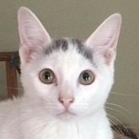 Adopt A Pet :: Chloe's Boy - Mobile, AL