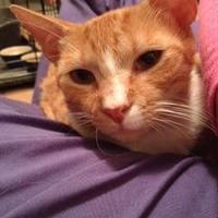 Adopt A Pet :: Sly - Hopkins, SC