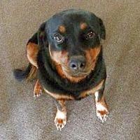 Adopt A Pet :: JoJo - Olive Branch, MS