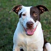 Adopt A Pet :: MATT - Brattleboro, VT